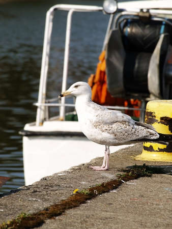 Seagull standing on the seashore