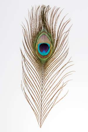 pluma de pavo real: pluma de pavo real sobre fondo claro