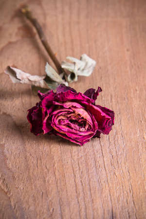a dried rose on a wooden table photo