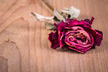 a dried rose on a wooden table Stock Photo