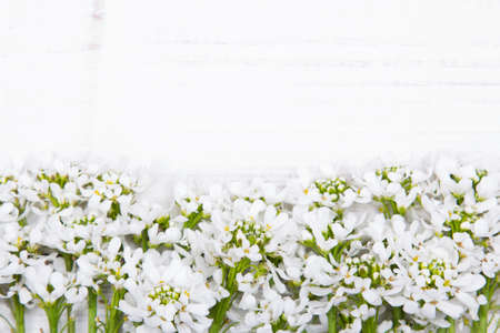 white flowers frame on white wooden background photo