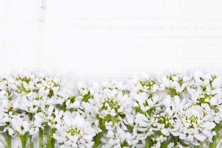 white flowers frame on white wooden background photo