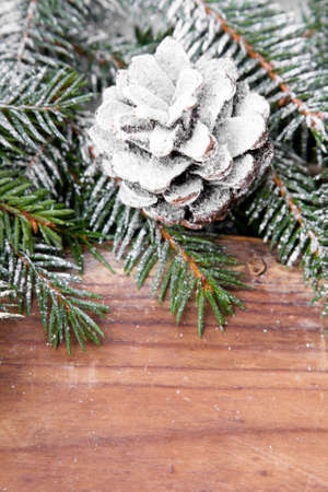 background with cone and fir branches photo