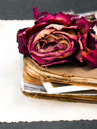 antecedents: dried rose, old book and empty photograph and  as a romance metaphor