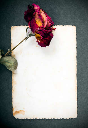 Dried red rose and blank photograph photo