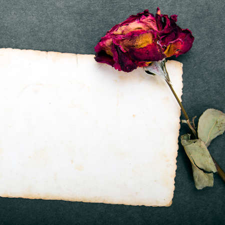 antecedents: Dried red rose and blank photograph Stock Photo