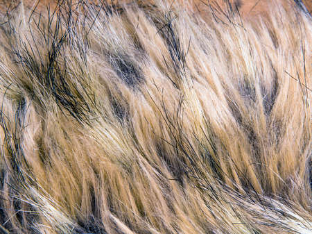 pelage: Brown artificial fur for background Stock Photo