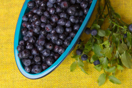 blueberry bushes: Blueberries in bowl
