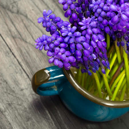 hyacinths: Muscari bouquet on a dark wooden table Stock Photo