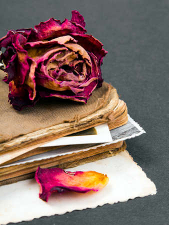 antecedents: dried rose old book and empty photograph as a metaphor romance