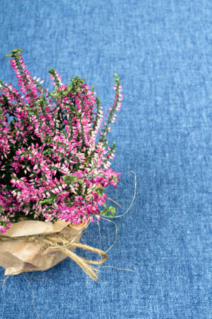 bouquet of heather on a blue tablecloth