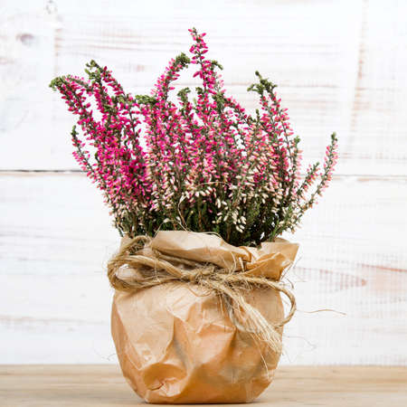 bouquet of heather on white wooden background photo