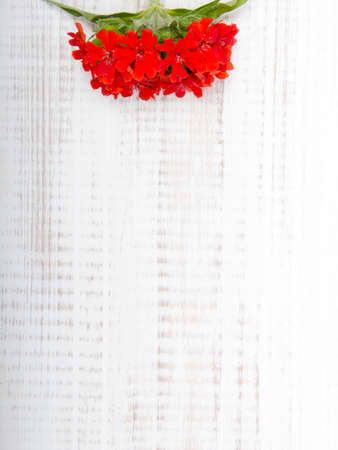 red flower on a white wooden background
