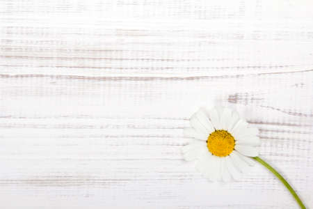 daisys: daisy flower on white wooden background