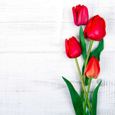 red tulips on white wooden background Stock Photo