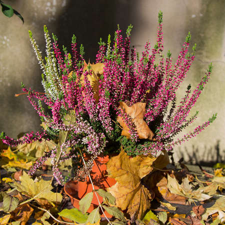 heather: bunch of heather and autumn leaves