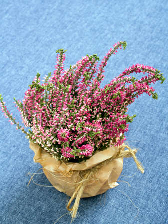 heather: bouquet of heather on a blue tablecloth