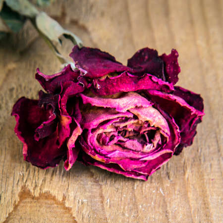 dried rose on a wooden table, copy space
