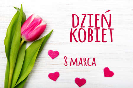 Women's day card with words Polish Women's Day. Tulip flower small hearts on a white wooden background.