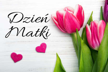 Mothers day card with Polish words: Dzien Matki - Mothers Day. Pink tulip on white wooden background.