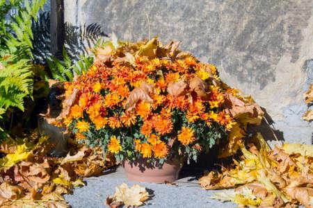 autumn colour: bouquet of chrysanthemums