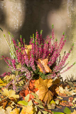 autumn colour: bunch of heather and autumn leaves