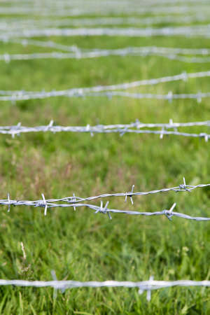barbed wire on a grass background, shallow depth of field