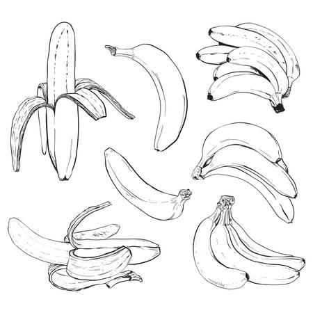 Banana set 矢量图像