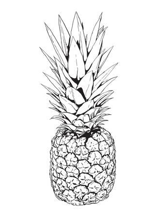 Zwart-wit afbeelding van een ananas Stock Illustratie