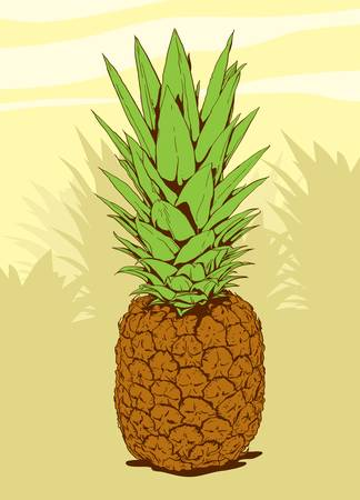 High detailed illustration of a pineapple 矢量图像