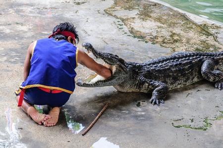 Crocdiles photo