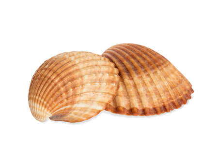 fish tail: Sea shells on white background