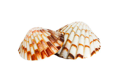 oceanic: Close up of ocean shell isolated on white background