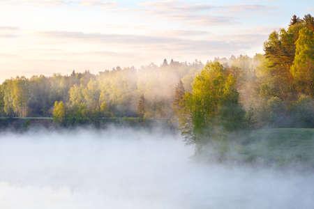 Foggy summer morning Stock Photo