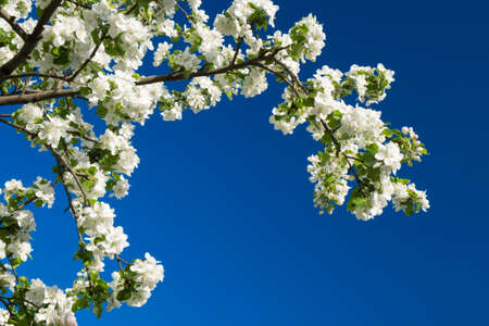 Blossom tree over nature Spring flowers blue sky background