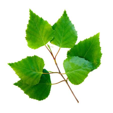 녹색 잎 격리 된 배경 스톡 콘텐츠