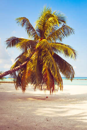 Tropical beach background with palm trees and sea Stock Photo