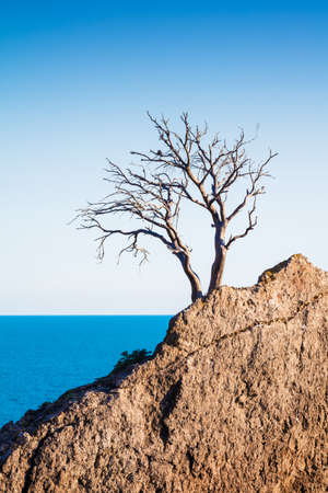 Lonely old tree pine on a mountain on the rocks on sea background. Stock Photo