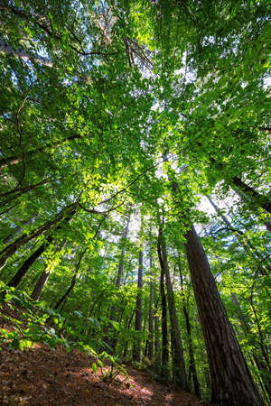 Variety crowns of the trees in the spring forest against the blue sky with the sun. Bottom view of the trees. Stock Photo