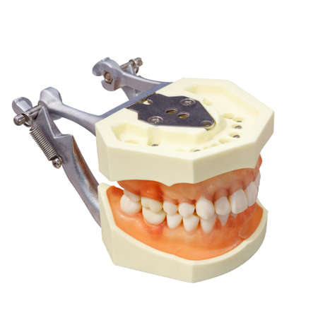 Orthodontic denture isolated on white background