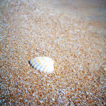 Shell on sand and summer time  Stock Photo