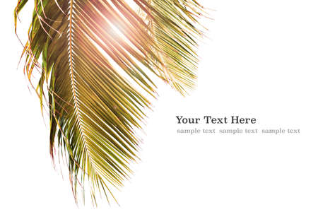 Tropical background with palm trees in sunlight. For Holiday travel design. Template palm trees isolated on white for web banner with copy space for Your text.  Holiday and travel concept.