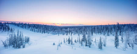 Winter forest panorama spruce hoarfrost red and blue tone dawn Standard-Bild