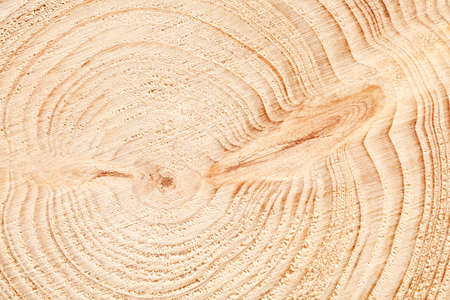 Large circular piece of wood cross section with tree ring texture pattern and cracks background. Detailed organic surface from nature.