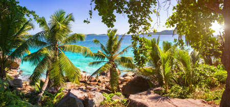 Palm and tropical sea beach panorama. Anse Source dArgent, La Digue island. Seychelles