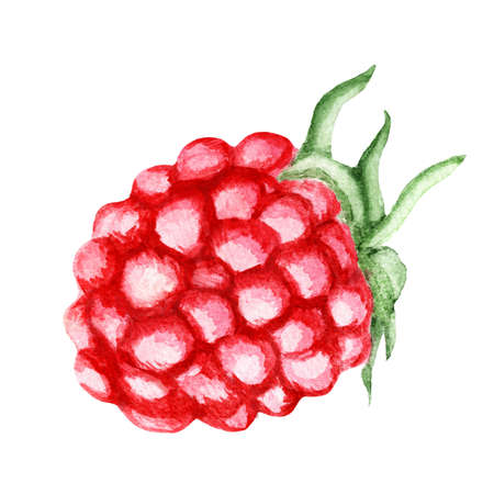 Fresh Raspberry. Watercolor illustration Banco de Imagens
