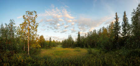 Early morning in the northern forest, Siberia, Russia
