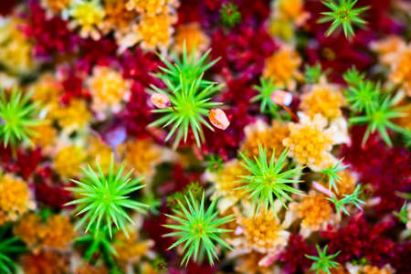 Red green yellow vegetable pattern, grass and moss close-up macro background, view from above