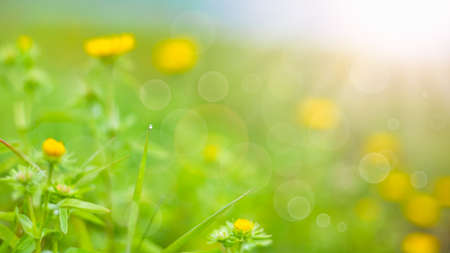 summer background. rural summer backgrounds. Abstract natural backgrounds with green grass and beauty bokeh