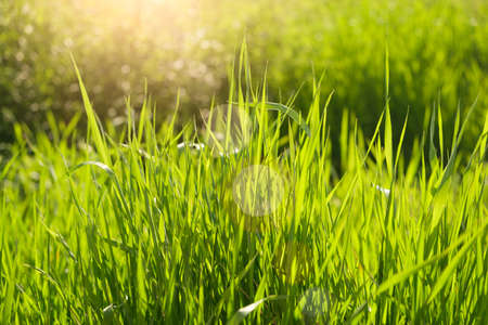 summer background. rural summer backgrounds. Abstract natural backgrounds with green grass and beauty bokeh Imagens